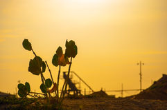 Plant Silhouette. A plant struggling for life surrounded by industry Royalty Free Stock Images