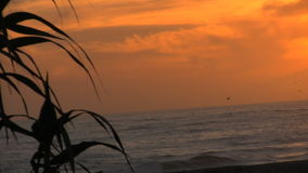 Plant Silhouette. Left justified plant silhouettes at the beach. Sunset stock video footage