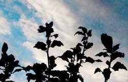 Plant on the sky is taken around Tokyo, Japan. It was pictured in the summer season around August. Sky was beautiful on this day. Plant on the sky is taken royalty free stock images