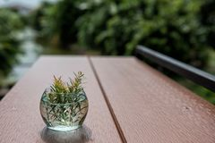 Plant on small glass flower pot. Green plant on small glass flower pot decorated on wooden table with natural farm background Royalty Free Stock Images