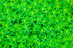 Plant with small leaves Stock Photos