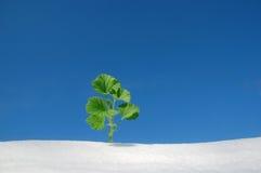 Plant on snow stock photo