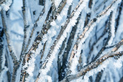 Plant in snow Stock Image