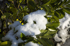 Plant in the snow Stock Image