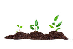 Plant in  soil Stock Images