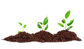 Plant in  soil Stock Photos