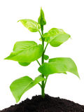 Plant and soil Stock Image