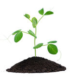 Plant and soil stock photo