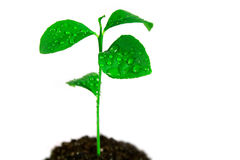 Plant in soil Royalty Free Stock Photos