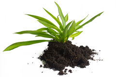 Plant and Soil. Plant and Soil isolated on white background Stock Photography