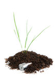Plant in the soil and battery Royalty Free Stock Photo
