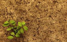 Plant with soil. A plant with soil natural landscape Stock Photo