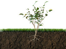 Plant in soil section Royalty Free Stock Photos