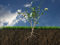 Plant in soil section Stock Photography