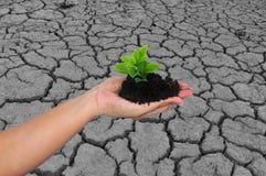 Plant on soil Royalty Free Stock Photo