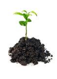 Plant in soil Stock Photo