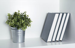 Plant with some books on a shelf. Decoration Stock Photography