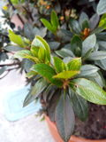 Plant sown Stock Photos