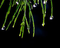Plant that sparkles from morning dew. Plant that sparkles and twinkles from morning dew royalty free stock photos