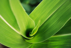 Plant spiral Royalty Free Stock Photo