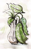 Plant in a vase. Plant with spotty leaves in a glass vase Royalty Free Stock Images