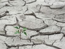 Plant sprout in dried land Stock Photo