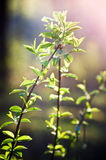 Plant sprout in spring Royalty Free Stock Image