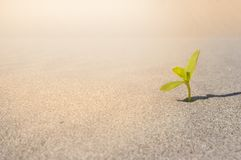 Plant sprouting in the desert Sahara. Seedling sand background. One sprout. Green Leaves Growing on sand. Sprouting in desert climate. Plant sprouting in the Stock Photography
