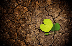 Plant sprouting on dried arid cracked soil ground. concept of beginning and hope Stock Photos