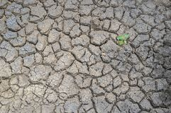 Plant sprouting in dried cracked river bed soil Stock Photography