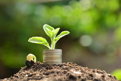 Plant and stack coins feeling success finance, nature background. Plant and stack coins feeling success finance Royalty Free Stock Photos