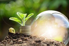 Plant and stack coins feeling success finance, nature background. Plant and stack coins feeling success finance Royalty Free Stock Photography