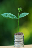Plant on stacked coins against green Royalty Free Stock Photo