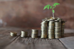 Plant and stacks of coins Royalty Free Stock Image