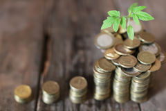 Plant and stacks of coins Stock Image