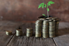 Plant and stacks of coins Royalty Free Stock Photos