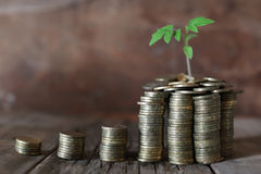 Plant and stacks of coins Stock Images