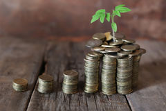 Plant and stacks of coins Stock Photo