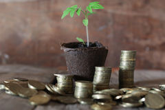 Plant and stacks of coins Royalty Free Stock Images