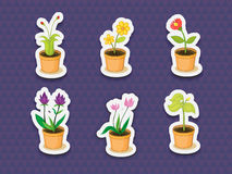 Plant stickers Stock Image