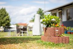 Plant stone with flowers in a campsite royalty free stock photos