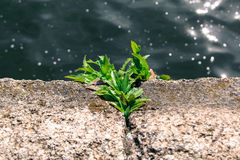 Plant on the stone. royalty free stock photo
