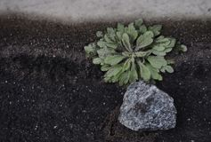 Plant and stone. Photo with the image of plant and stone Stock Image