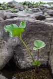 Plant and stone on shore of river. Royalty Free Stock Photography