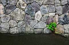 Plant on Stone Wall Royalty Free Stock Photo