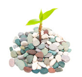 Plant in the stones Royalty Free Stock Photography