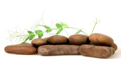 Plant among stones Royalty Free Stock Image