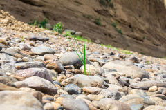 Plant between stones Royalty Free Stock Photos