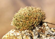 Plant on stones. A green plant in the nature is growing on a stone royalty free stock image