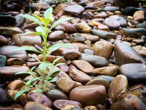 Plant on stones Stock Image
